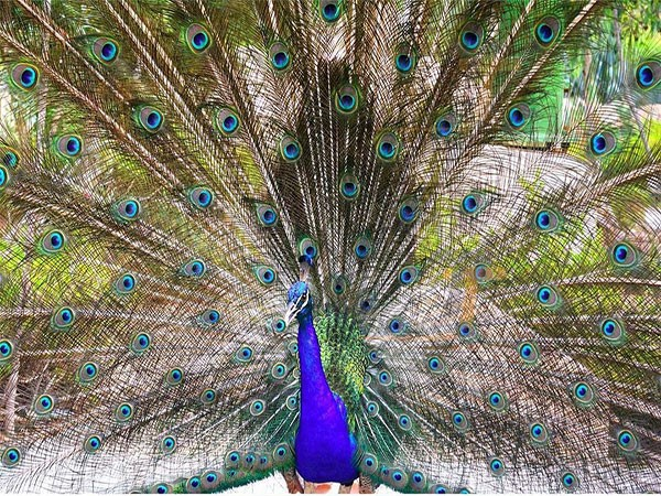 باغ پرندگان کیش کجاست-ساعت کار باغ پرندگان کیش-ورودی باغ پرندگان کیش-باغ پرندگان در کیش-باغ پرندگان پارک دلفین کیش-باغ پرندگان جزیره کیش