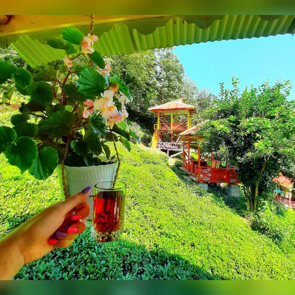 باغ چای املش باغات چای املش ویلارابط مناطق ییلاقی و باغات چای املش (۴)