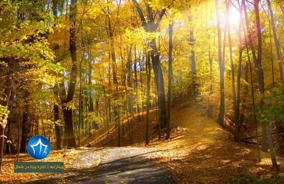 جنگل اولنگ کجاست-فاصله شاهرود تا جنگل اولنگ- جنگل اولنگ در پاییز- جنگل اولنگ در شاهرود-جنگل اولنگ گلستان-