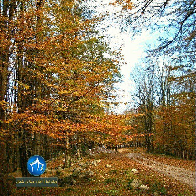 جنگل تیلاکنار تیلاکنار متل قو تیلا کنار سلمانشهر مازندران جنگل متلقو (۲)