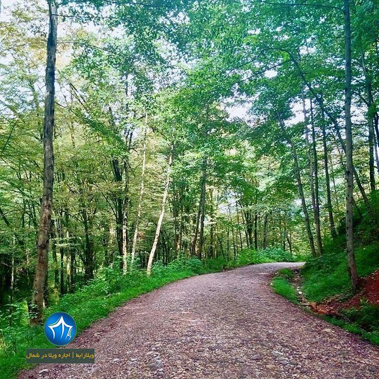 جنگل تیلاکنار تیلاکنار متل قو تیلا کنار سلمانشهر مازندران جنگل متلقو (۳)
