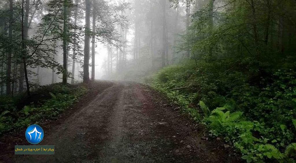جنگل دوهزار تنکابن جنگل ۲۰۰۰ (۲)