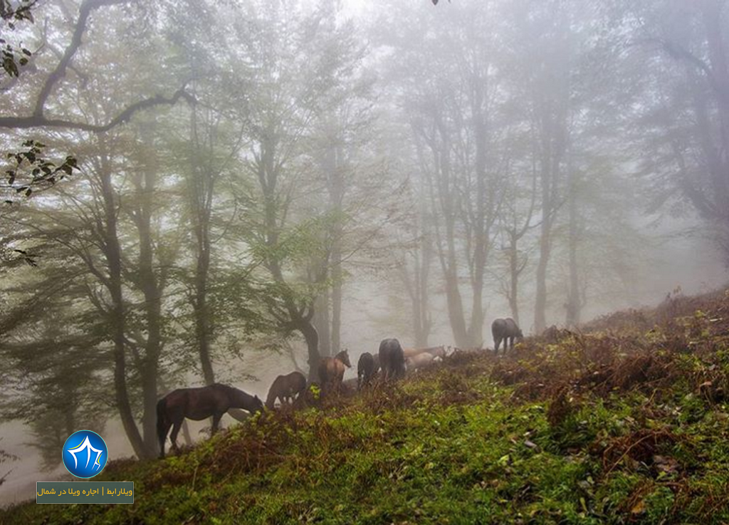 جنگل سه هزار تنکابن جنگل ۳۰۰۰ تنکابن (۱)