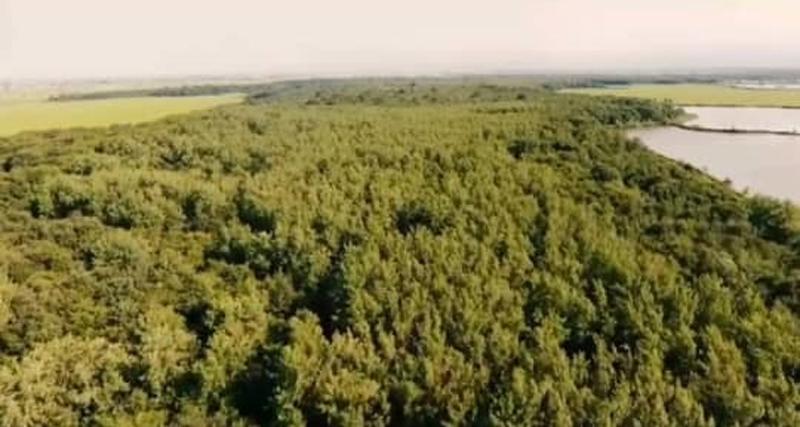 جنگل-محمودآباد-مازندران-شمال اجاره ویلا در شمال