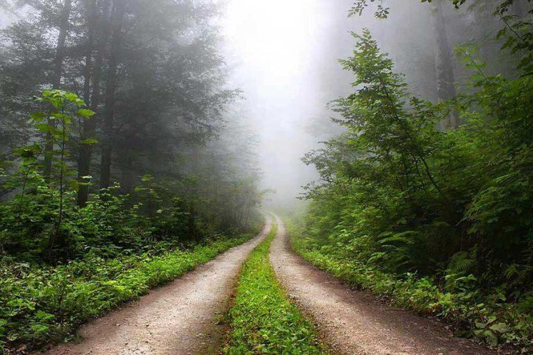 جاده جنگلی جواهرده