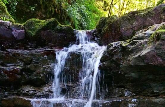 تصویر پارک جنگلی خشکه داران کجاست؟ آشنایی با خشکه داران جاذبه گردشگری مازندران (۲)