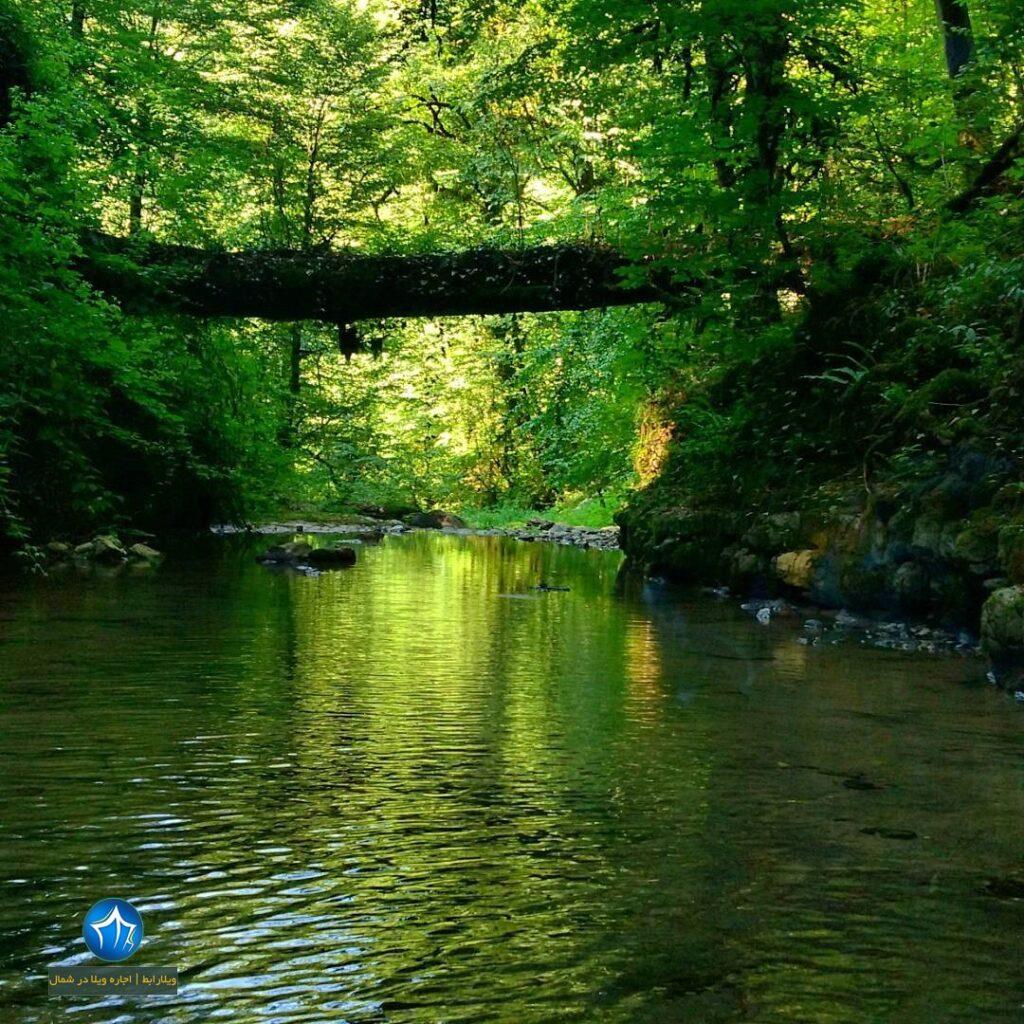 پارک جنگلی پارک ملی خشکه داران خشکه داران کجاست؟ آشنایی با خشکه داران جاذبه گردشگری مازندران ( پارک عباس اباد )