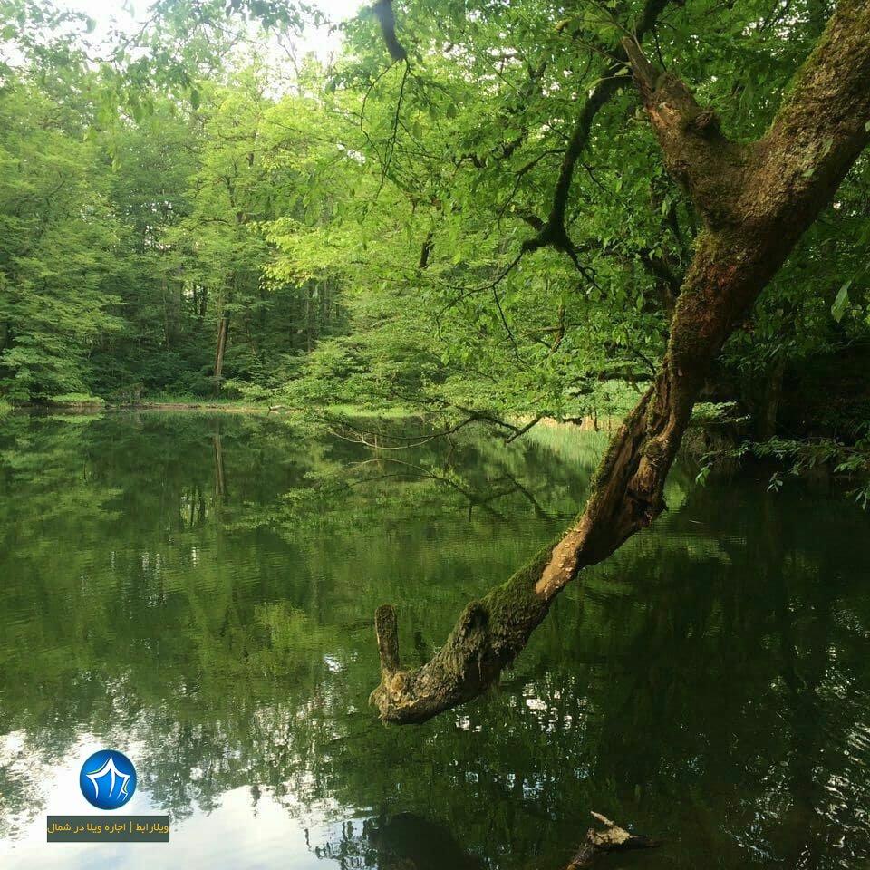 دریاچه فراخین نوشهر دریاچه فراخین کجاست دریاچه فراخین کجور تالاب فراخین