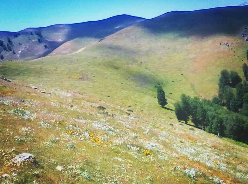 دهکده ییلاقی ورزشی سالانسر رودبار ( دهکده ییلاقی ورزشی سالانسر رودبار در ارتفاع ۱۲۵۰ متری) (۱)