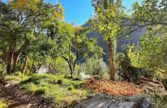 روستای انبوه رودبار مراسم انار چینی در بافت تاریخی روستای انبوه رودبار (۳)