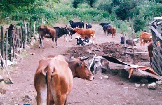 روستای سینه هونی تالش تالش، گران، ویلارابط، اجارهی ویلا در تالش، تورهای گردشگری یک روزه (۱)