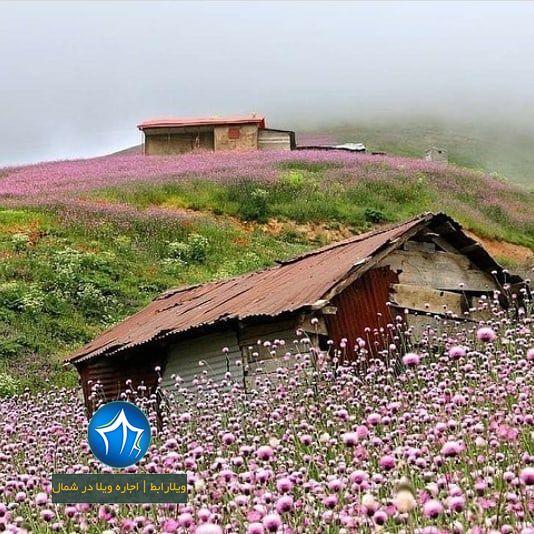 روستای مریان تالش، استان گیلان، گردشگران، ویلارابط، اجارهی ویلا در مریان، تورهای گردشگری یک روزه (۱)