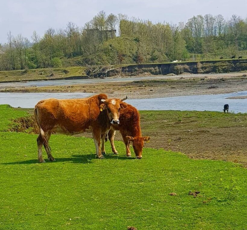 روستای نهزم گیلان-روستای نهزم صیقل کومه-نهزم کجاست-روستای نهزم شفت۲