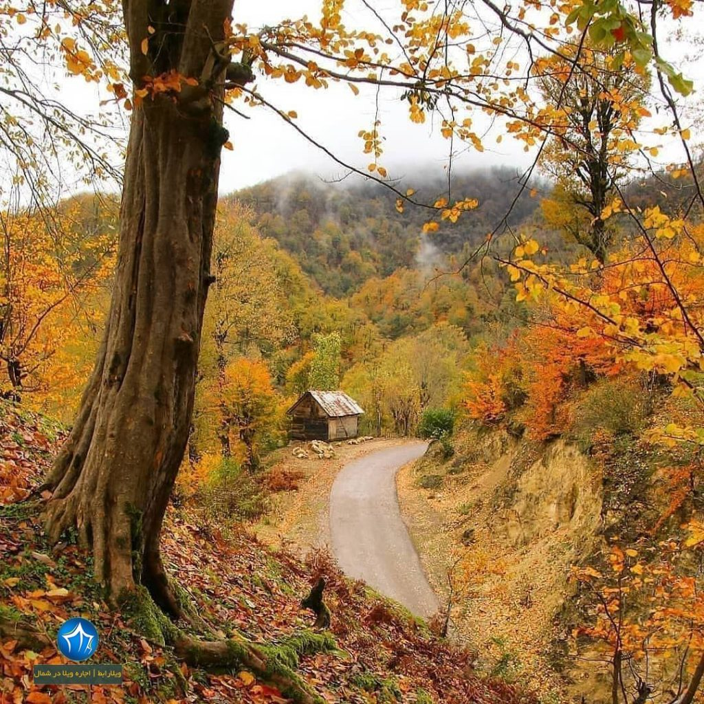 منطقه جنگلی خرما سایت ویلا رابط-اجاره ویلا-تور یک روزه گردشگری (۲)