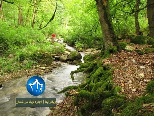 منطقه حفاظت شده جهان نما گرگان- جنگل جهان نما- منطقه حفاظت شده جهان نما کجاست- منطقه حفاظت شده جهان نما کردکوی -ییلاق جهان نما-۲
