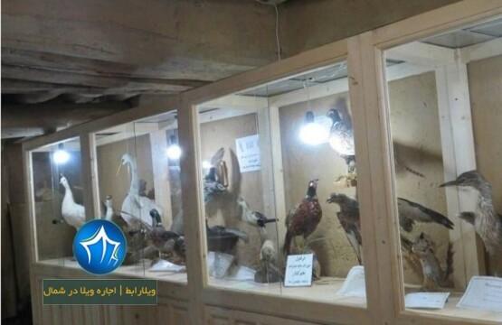 موزه ماسوله عکس موزه ماسوله-موزه ماسوله-موزه مردم شناسی ماسوله-موزه حیات وحش ماسوله