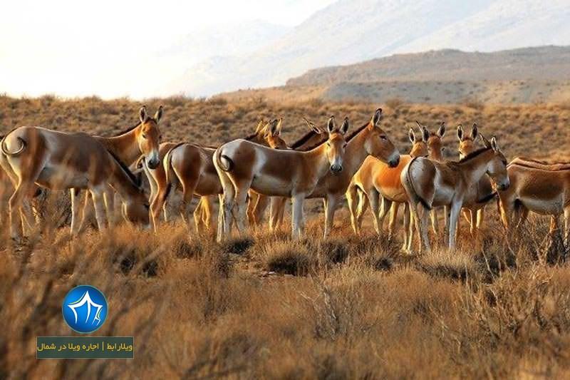 ه خارتوران-منطقه حفاظت شده توران کجاست-منطقه حفاظت شده توران در شهرستان شاهرود