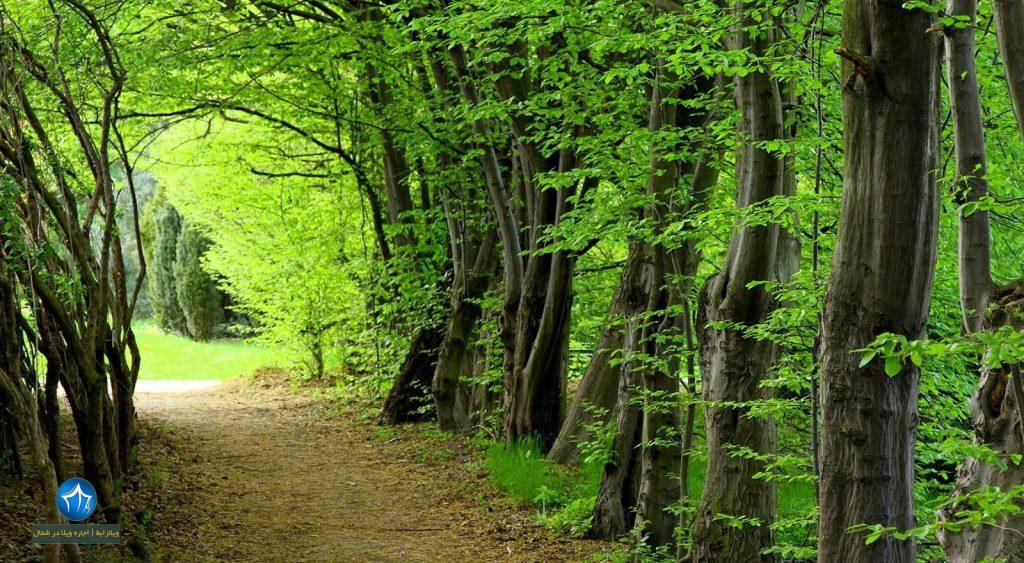 پارک-جنگلی-بلوردکان-لنگرود-پارک-جنگلی-هلودشت-املش-جنگل-های-بلوردکان-جنگل-بلوردکان-املش-جنگل-هلودشت-بلوردکان-و-هلودشت-1024x563