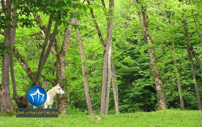 پارک جنگلی بلوردکان لنگرود- پارک جنگلی هلودشت املش-جنگل های بلوردکان-جنگل بلوردکان املش-جنگل هلودشت-بلوردکان و هلودشت۱