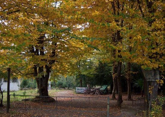 پارک جنگلی رضوانشهر-پارک جنگلی دکتر درستکار-آدرس پارک جنگلی دکتر درستکار-پارک جنگلی گیسوم پارک جنگلی دکتر درستکار رضوانشهر