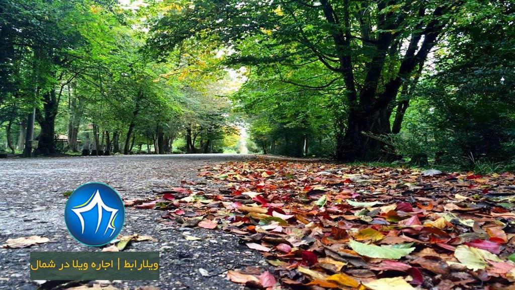 پارک-جنگلی-سیسنگان-جاده-سیسنگان-درخت-برگ
