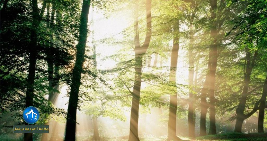 پارک جنگلی نور اجاره ویلا در نور اقامت در پارک جنگلی نور استان مازندران (۱)