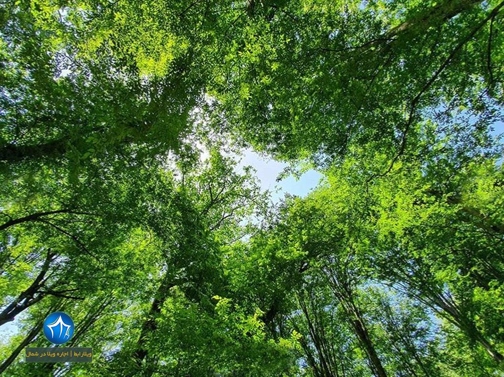 پارک جنگلی نور اجاره ویلا در نور اقامت در پارک جنگلی نور استان مازندران (۳)