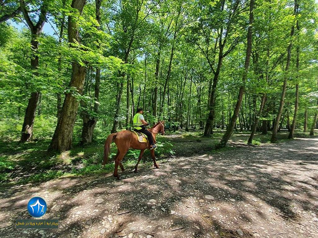 پارک جنگلی نور اجاره ویلا در نور اقامت در پارک جنگلی نور استان مازندران اسب سواری در پارک جنگلی نور