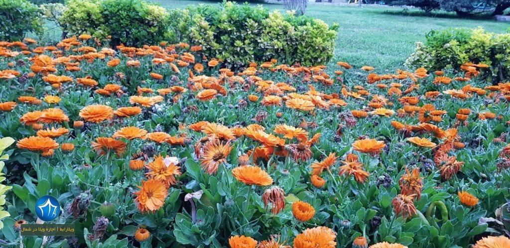 پارک-چاله-باغ-گرگان-پارک-چاله-باغ-گلستان-عکس-پارک-چاله-باغ-گرگان-نمایی-از-پارک-چاله-باغ-1-1024x498