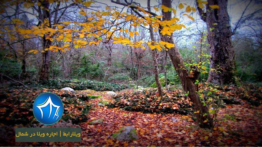پاییز-پارک-جنگلی-سیسنگان